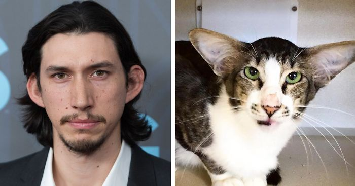 Actor Adam Driver alongside a cat that shares the actor's prominent nose and large ears